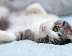 Как лечить колит у кошек фото