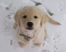 В какое время года лучше заводить собаку фото