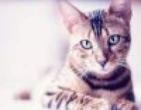 В каком возрасте можно стерилизовать кошек фото