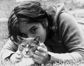Важные моменты содержания кошки в доме фото