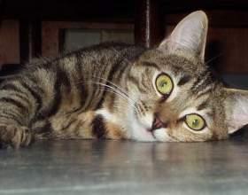 Воспитание кошек. фото