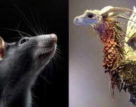 Восточный гороскоп совместимости: дракон и крыса фото