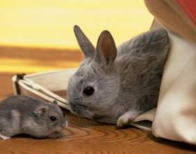 Восточный гороскоп совместимости: крыса и кролик фото