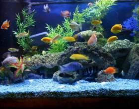 Все для аквариума: как начать фото