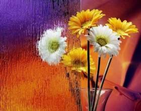 Все о гербере: как ухаживать за цветком фото