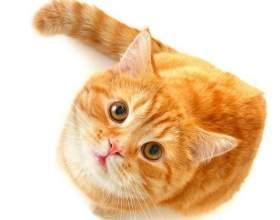 Все про кошек: как ухаживать фото