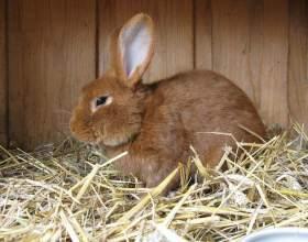Все про кролиководство как бизнесе фото