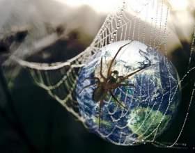Всемирная паутина: почему интернет так называют фото