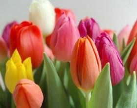 Вторая жизнь срезанных тюльпанов фото