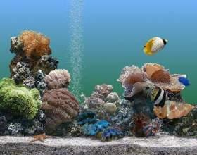 Как выбрать рыбок и аквариум при покупке фото