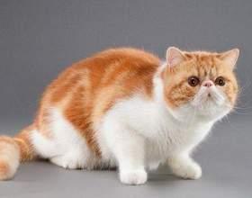 Какие существуют породы кошек фото