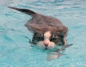 Зачем и как купать кота фото