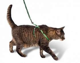 Зачем кошке поводок фото