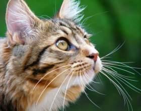 Зачем кошке усы фото