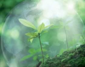Защита экологии: как спасти природу фото